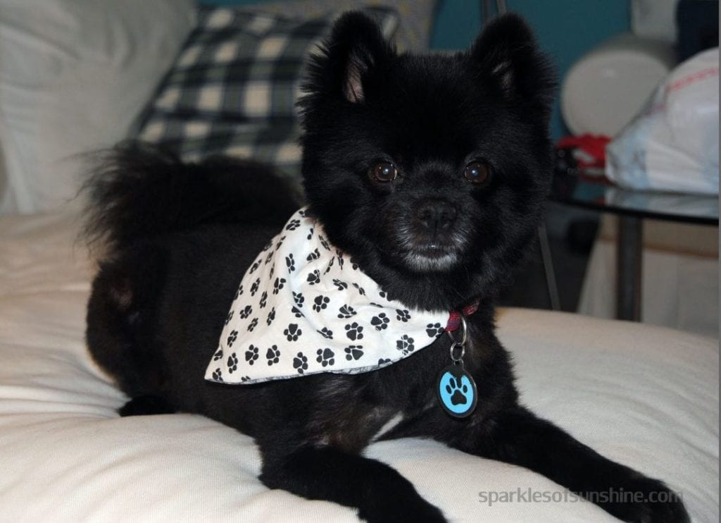 Dog Banda