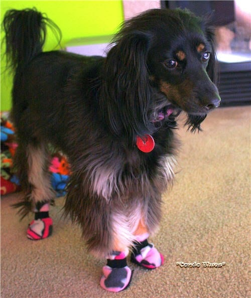 dog booties free sewing tutorial