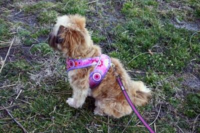 Kimono Dog Harness FREE Pattern