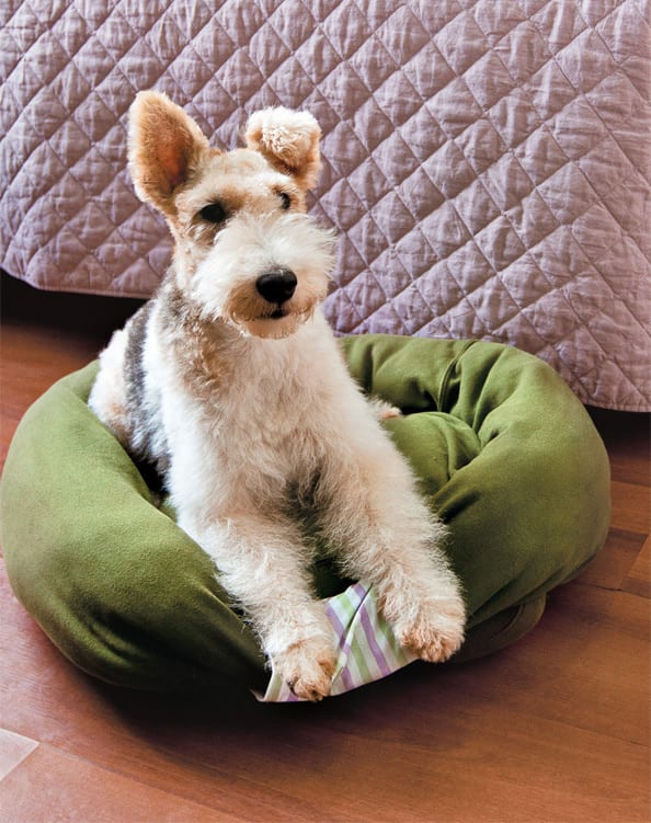 Pet Bed FREE Sewing Tutorial