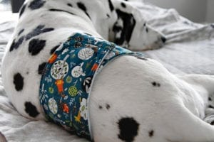 Belly Band Dog Diaper FREE Tutorial