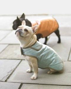 Dog Coats FREE Sewing Pattern