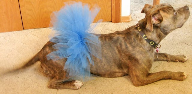 Dog Tutu FREE Sewing Tutorial