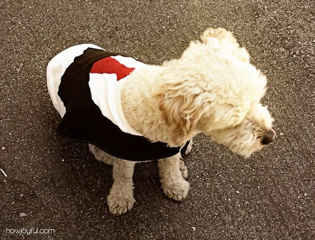 Pet Vest FREE Sewing Tutorial