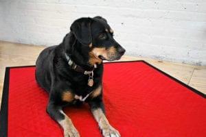 Dog Blanket FREE Sewing Tutorial