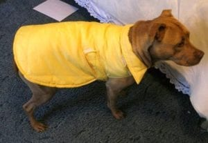 Weather Resistant Coat for Your Pet