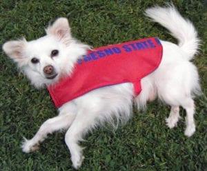 Dog Raincoat FREE Sewing Tutorial