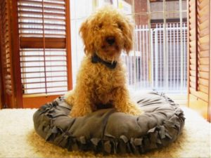 Dog Bed FREE Tutorial