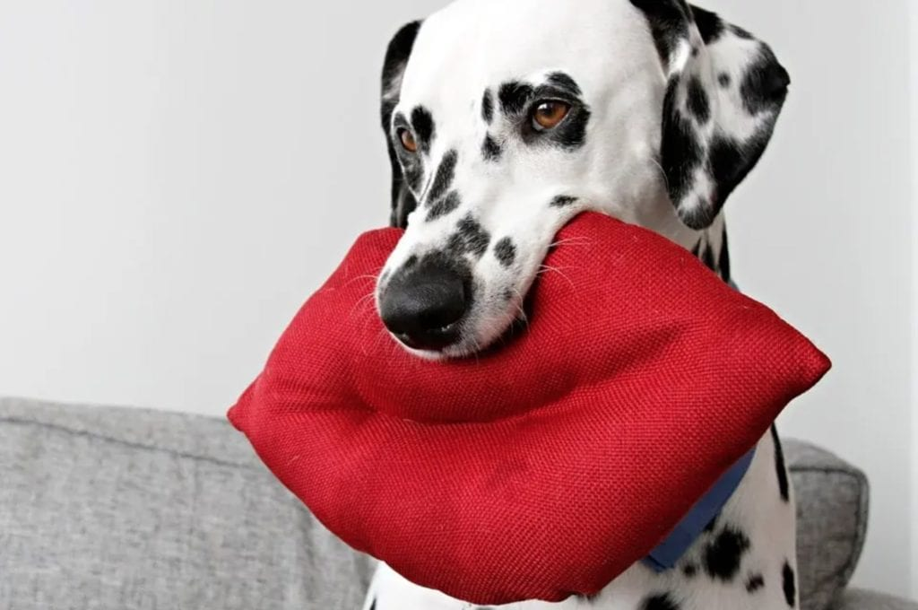 Giant Lips Stuffed Dog Toy FREE Sewing Tutorial
