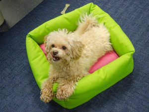 How to Make a Dog Bed